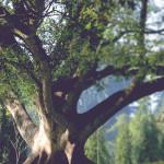 Tree_Image_SourcePage